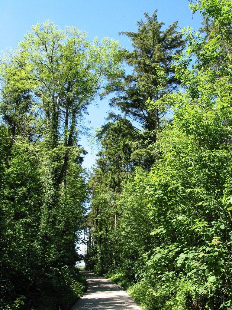 Oak Park Forest Park carlow